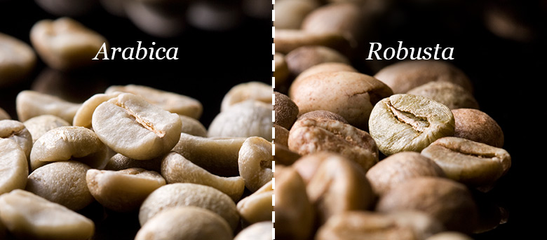 Arabica vs Robusta Coffee Beans